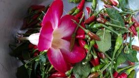 Azaleablomma och chili Royaltyfri Fotografi