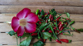 Azaleablomma och chili på bambustol Fotografering för Bildbyråer