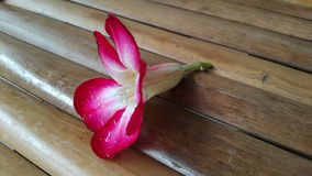 Azaleablomma på bambustol Arkivfoton