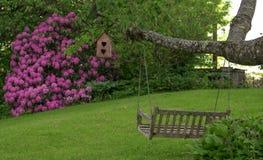 azaleaen blommar pink royaltyfria foton