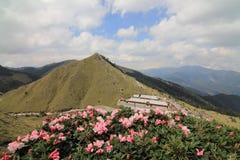 Azalean blommar på det Hehuan berget Arkivfoto