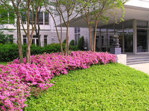 Free Azaleas At Office Building Royalty Free Stock Photo - 304915