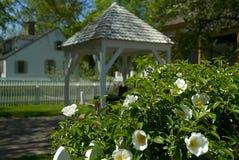 Azaleas blancas Fotografía de archivo