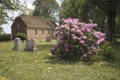 Azaleas blooming Stock Photo