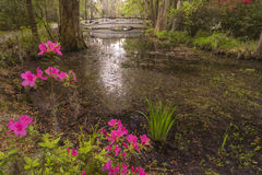 Azaleas Blooming in the Plantation Garden, near Charleston, SC. Pretty pink and red azaleas blooming on the banks of a garden pond with a white foot bridge on a royalty free stock photos
