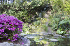 Azaleas Blooming by Waterfall Stock Images
