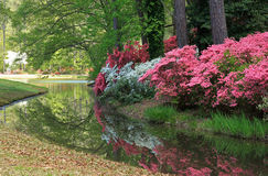 Azaleas at Callaway Gardens Stock Photography