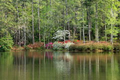 Azaleas at Callaway Gardens Royalty Free Stock Photography