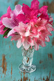 Azaleas in glass Vase Royalty Free Stock Photography