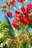 Azaleas and Palms Royalty Free Stock Image