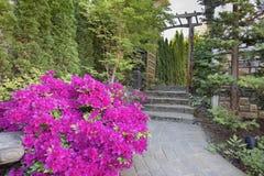 Azaleas rosadas que florecen a lo largo de la trayectoria del jardín Foto de archivo libre de regalías