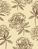 Azaleas. Seamless floral vector pattern. Azaleas. Seamless floral pattern in vintage style. Vector illustration Stock Image