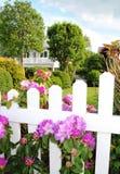 azaleas som blommar trädgårds- home pink för blommor Royaltyfri Fotografi