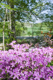 Azaleas in spring in National Arboretum with Capitol Columns in background, Washington D.C. Royalty Free Stock Image