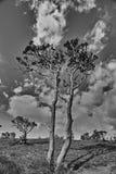 Azaleaträdet Arkivbilder