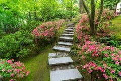 Azaleen in der Blüte entlang japanischer Steintreppe Stockbild