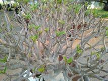 Azaleenbaumwurzeln Stockfoto