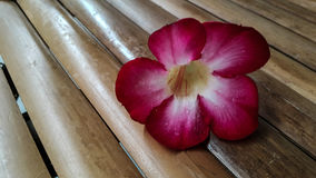 Azaleenblume auf Bambus Lizenzfreie Stockfotografie