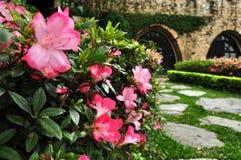 Azaleenblumen und Backsteinmauerschloss Stockbilder