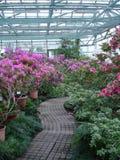 Azalia kwiat obrazy stock
