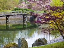 Azalii okwitnięcie w japończyka ogródzie fotografia royalty free