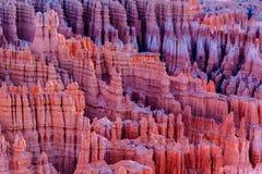 Azarentos em Bryce Canyon, Utá no nascer do sol Foto de Stock Royalty Free