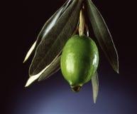 Azeitona com petróleo verde-oliva fotografia de stock