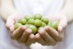 Azeitona verde Imagens de Stock