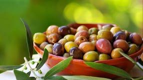 Azeitonas de Portugal. Imagens de Stock Royalty Free