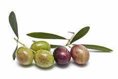 Azeitonas e folhas da azeitona. Imagens de Stock Royalty Free