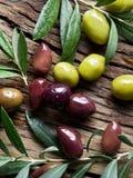 Azeitonas e galhos verde-oliva foto de stock royalty free