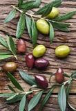 Azeitonas e galhos verde-oliva imagens de stock
