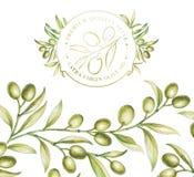 Azeitonas verdes Fotografia de Stock