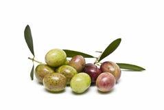 Azeitonas verdes e vermelhas com folhas. Fotos de Stock