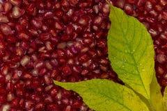 Azerbaijan pomegranate grains stock photos