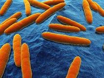 Azetobacter stock abbildung