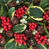 Azevinho e flora do inverno Fotos de Stock Royalty Free