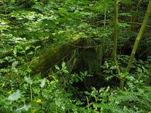 Azevinho e ponte musgo-coberta imagens de stock royalty free