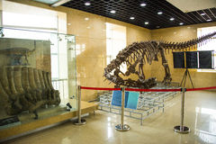 Azië China, Peking, geologisch museum, binnententoonstellingszaal Stock Foto