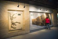 Azië China, Peking, geologisch museum, binnententoonstellingszaal Royalty-vrije Stock Foto's