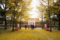 Azië China, Peking, Zhongshan-Park, Klassieke architectuur, ginkgoboom Royalty-vrije Stock Foto's