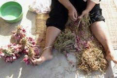 AZIË THAILAND ISAN AMNAT CHAROEN Stock Afbeeldingen