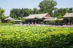 Azië China, Peking, het de Zomerpaleis, het paviljoen, galerij, lotusbloemvijver Royalty-vrije Stock Foto's