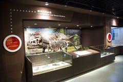Aziatisch China, Peking, Museum van de oude zaal van de animalï¼ tentoonstelling ŒIndoor, Stock Fotografie