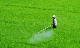 Aziatisch landbouwers bespuitend pesticide op padiegebied royalty-vrije stock foto's