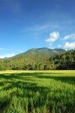 Aziatisch landschap met bergen en padieveld. stock fotografie