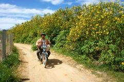 Aziatisch platteland, Vietnamese landbouwer, de wilde zonnebloem van Dalat Stock Foto
