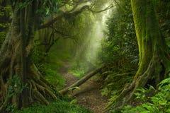 Aziatisch Regenwoud Royalty-vrije Stock Foto's