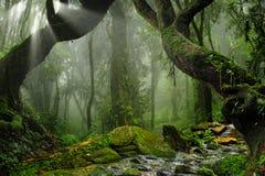 Aziatisch Regenwoud stock foto