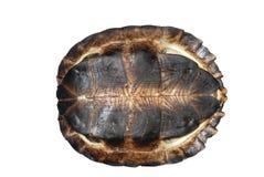 Aziatische bladschildpad stock afbeeldingen
